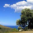 Ciel et olivier