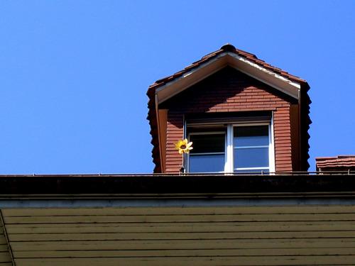 Tournesol solitaire, Bern